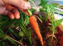 best-indoor-vegetables