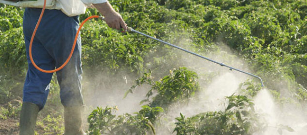 choosing-herbicide-for-your-garden