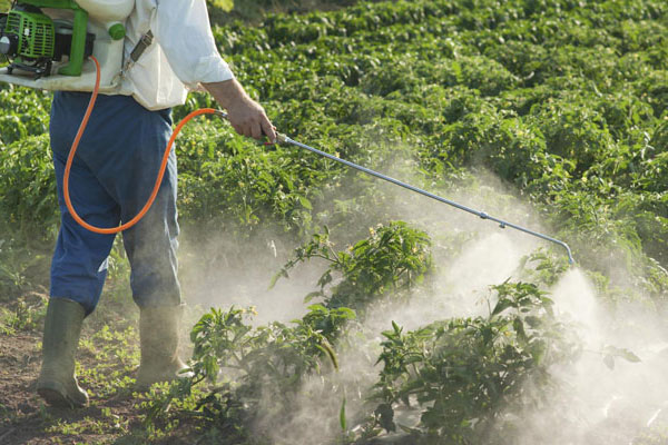 choosing-herbicide-for-your-garden