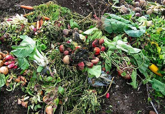 How to Create a Healthy Compost Pile for Your Home Garden Home