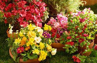 5 Flower Gardening Tips for Beginners Home Gardening Tips