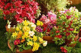 5 Flower Gardening Tips For Beginners