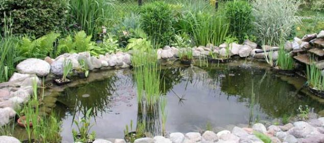 garden-pond