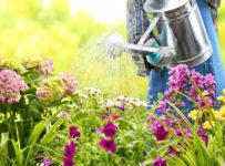 healthy-garden-plants