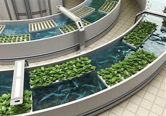 Wonderful Hydroponic Farming