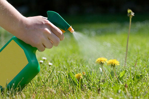 lawn-weed-control