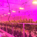 types-of-grow-light