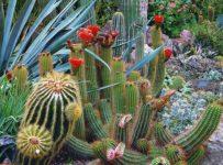 unusual-plant-species